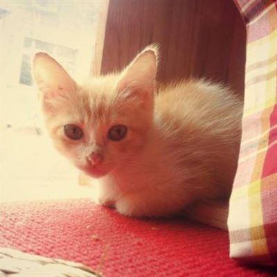 Clover Coffee Cat – Trần Nhật Duật